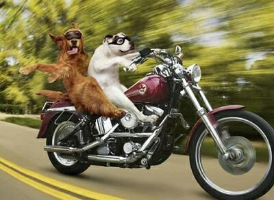 dogs-on-bike